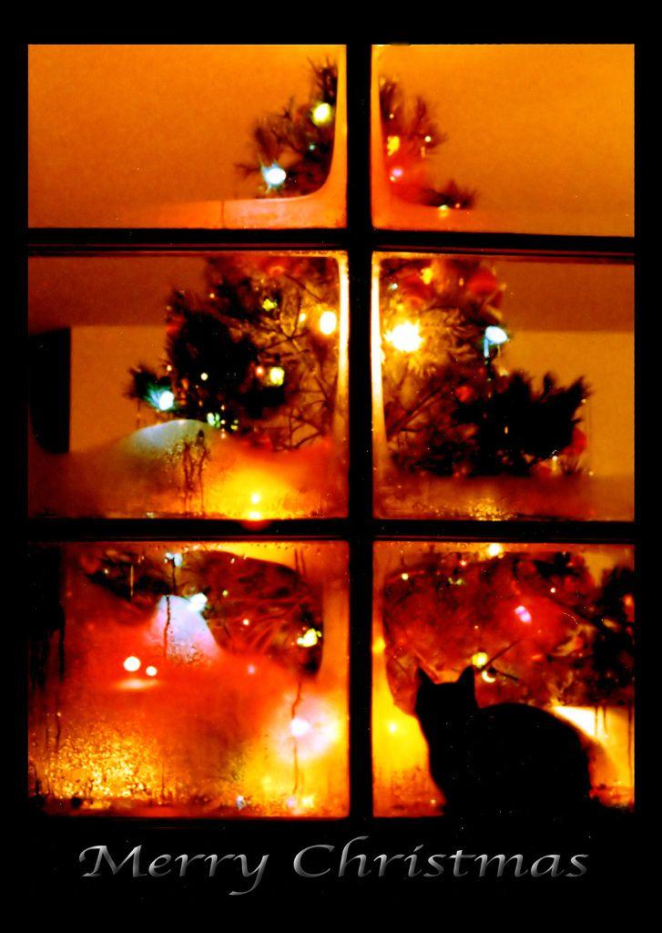 .: Christmas Photography, Friends, Trav'Lin Lights, Christmas Windows, Christmas Lights, Christmas Cat, Christmas Trees, Merry Christmas, Cozy Christmas