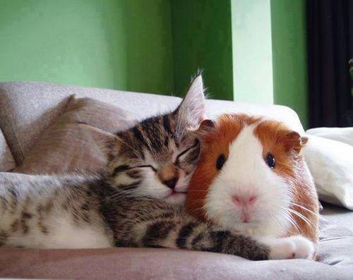 Instant niais : des animaux qui dorment avec d'autres animaux