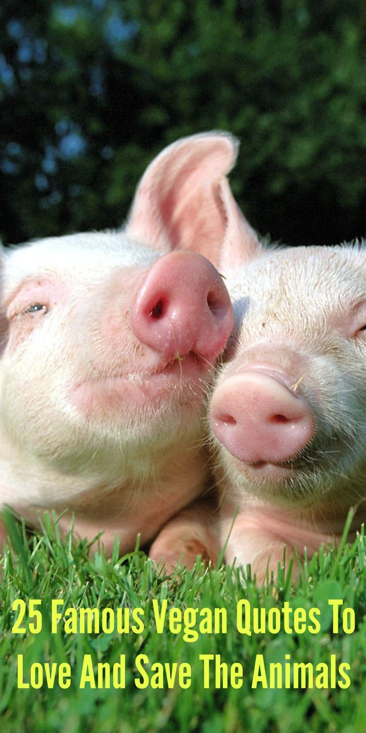 25 Famous Vegan Quotes To Love And Save The Animals