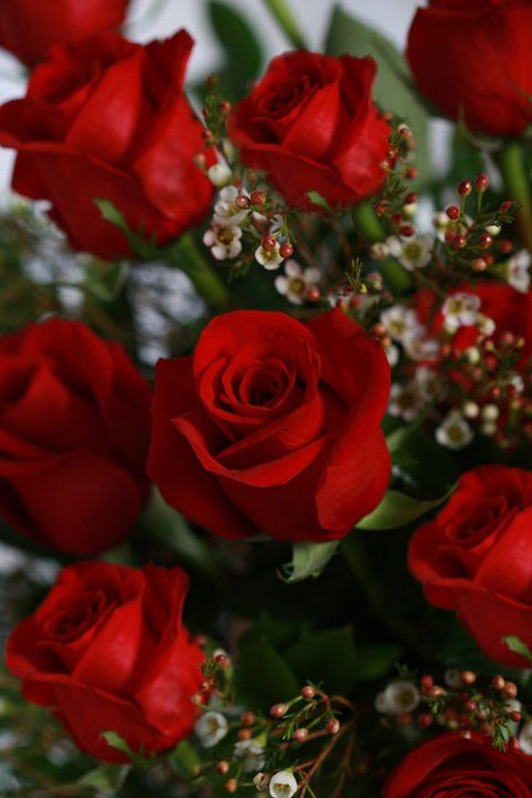 35 best Roses ~ Red images on Pinterest | Beautiful flowers, Pretty ...