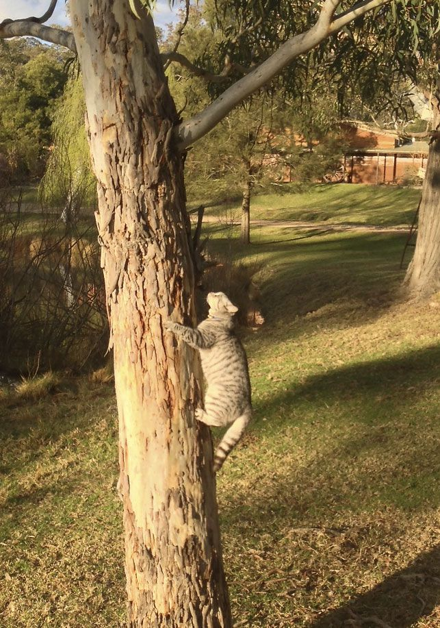 Hold that Pose! Bubbles pretending to be a Goanna.  Loves when a camera is pointed her way.
