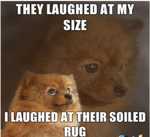 Dog Urine Oriental Rug: 8 Best Images About Rugs & Dogs On Pinterest