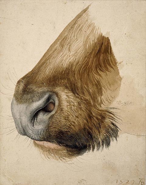 Albrecht Durer.  Google Image Result for http://2.bp.blogspot.com/_7SKBX2cPQjo/TSjezJzo9XI/AAAAAAAAAeg/vLRacTUFsFY/s1600/durer-muzzle-of-a-bull.jpg