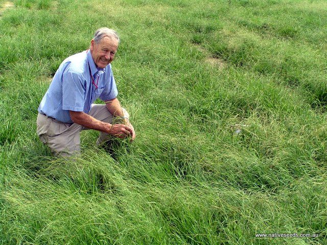 Prof. Wal Whalley proud of his fine-leafed Griffin Weeping grass, selectively bred for turf