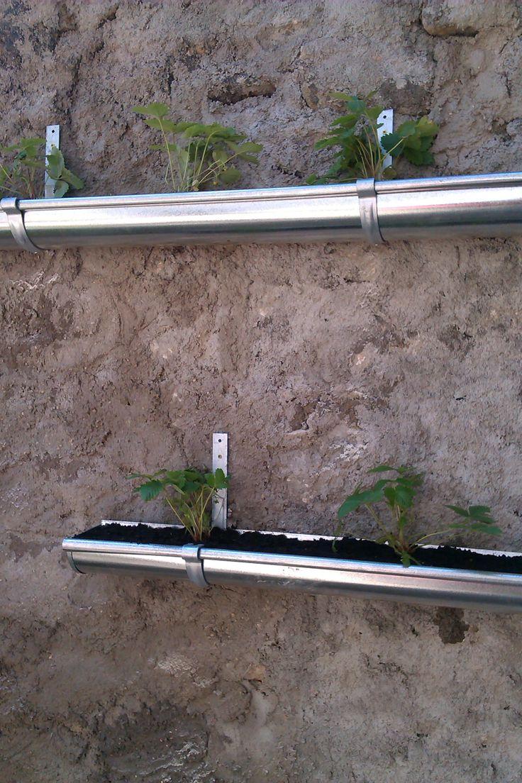 39 best bac plantes images on pinterest herb garden. Black Bedroom Furniture Sets. Home Design Ideas