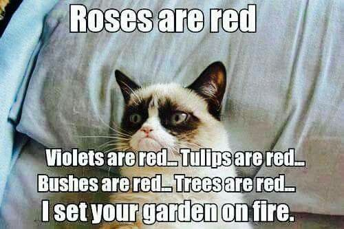 A little poem from Grumpy Cat.