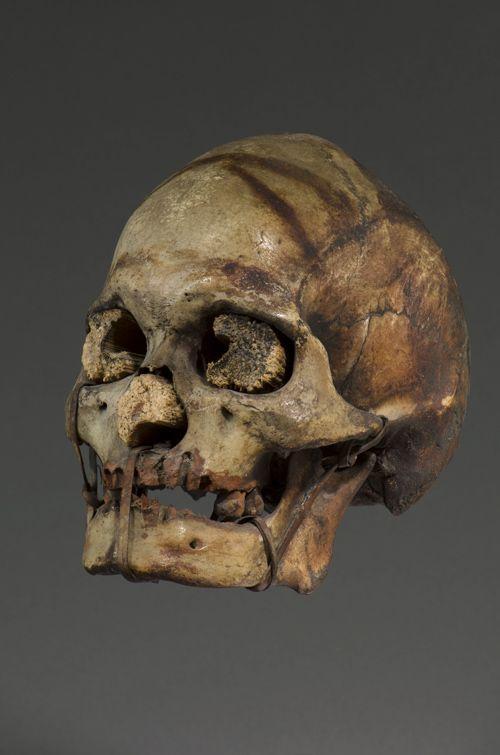 Crâne trophée