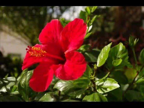 Fotos de: Islas Canarias - Lanzarote - Flora de la isla
