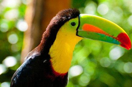 Изысканная экзотика в окружении пальм и теплого моря! Вылет 16 декабря в Ньячанг на 12 ночей всего за 27 956 рублей!