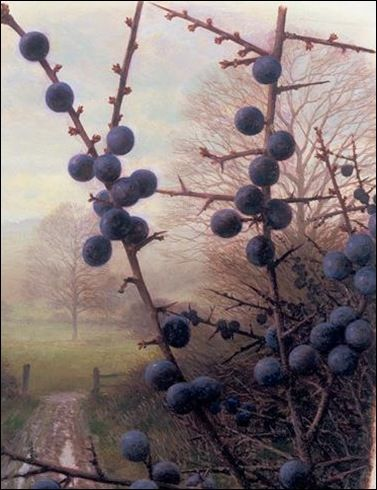 BLACKTHORN SLOES: sloe gin / blackberry wine / nettle beer - hedgerow brews for sale in the shop or restaurant