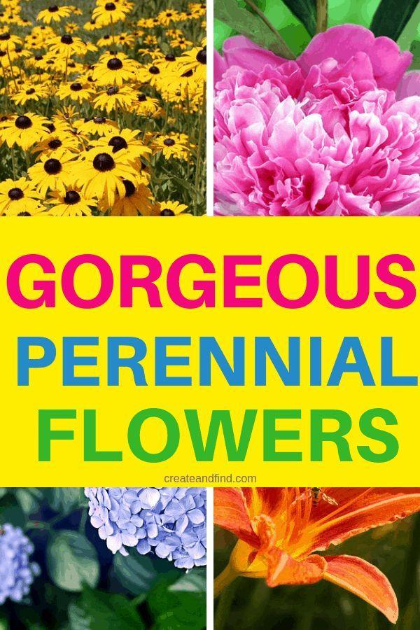 Gorgeous Perennial Flowers You Ll Love To Plant Flowers Gorgeous Love Perennial Plant Youll Pflanzen Mehrjahrige Blumen Blumen