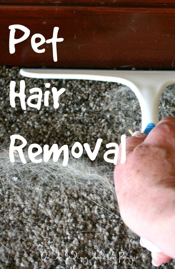 1000 Ideas About Remove Pet Hair On Pinterest Cat Pee