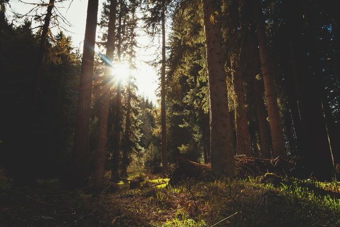 Dichter Wald! #Fotografie #Wald #Baum #Natur #Sonne #warm #Foto