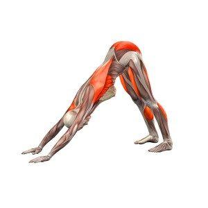 downwardfacingdogpose  yoga oefeningen