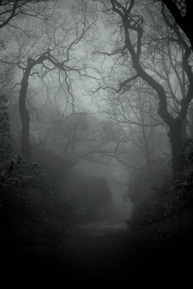 A Dark And Foggy Night!