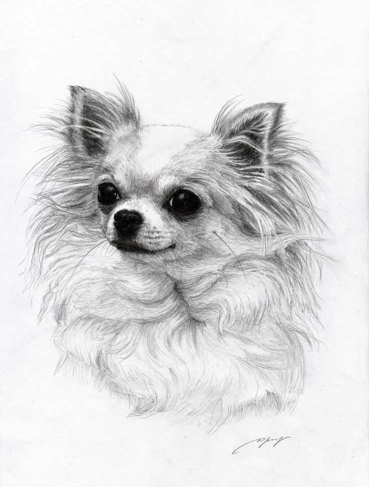 Drawing Animals Chihuahuas Dog Art Ideas Forward Chihuahua