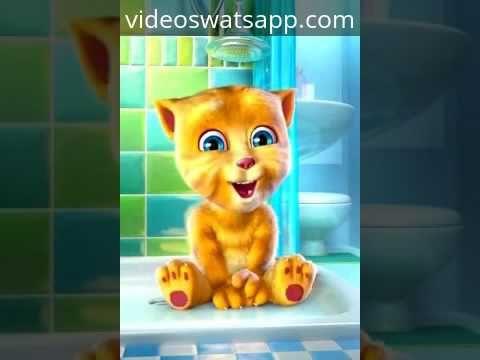 Chiste del Gato Tom El Gato Gitano http://videoswatsapp.com Comparte y reproduce los videos más divertidos para whatsapp, facebook. ¡Compartelos con t...