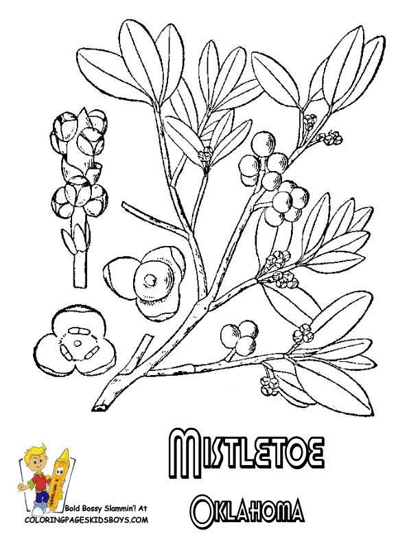251 best USA Coloring Pages images on Pinterest Free coloring