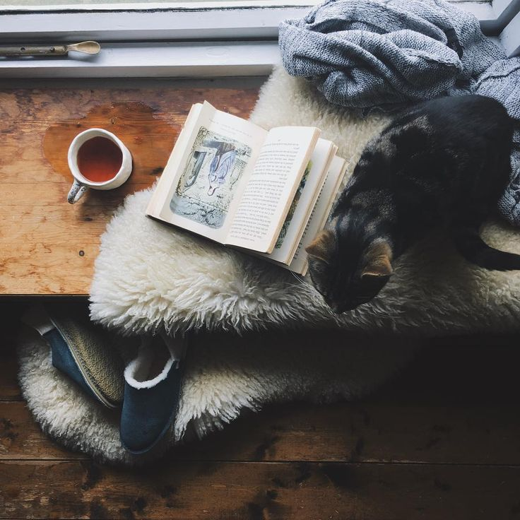 Three favorite things together Cat. Book. Tea