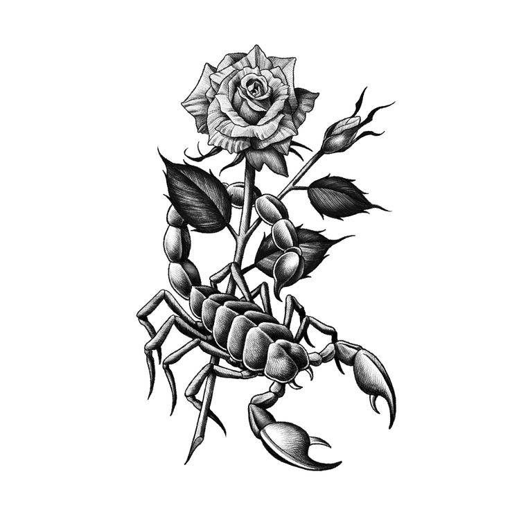 23++ Amazing Traditional scorpion tattoo flash image HD