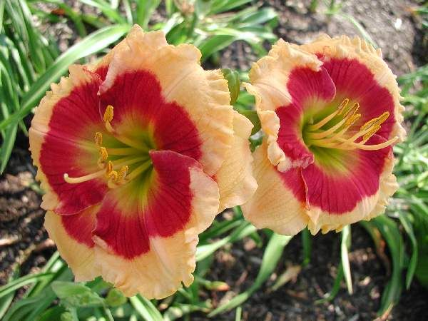 paula's flowers dallas ga