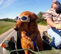 Dog In Motorcycle Side Car! Cute.  www.throttlexbatteries.com