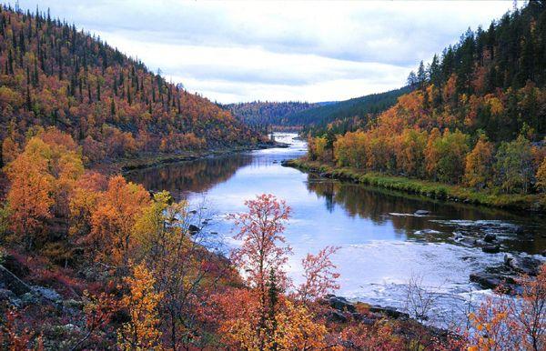 Fall colors, Kakslauttanen, Finland