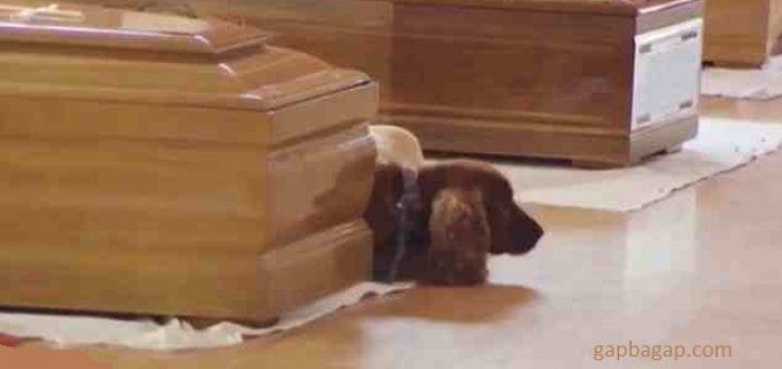 dog refuses to leave owner coffin