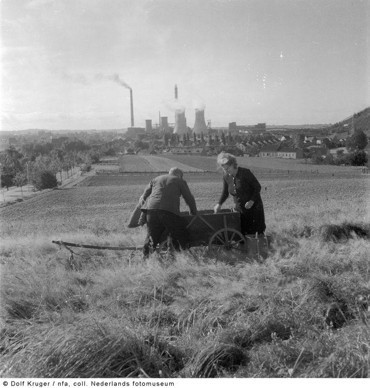 Gepensioneerden zoeken naar kolen in een steenberg, Limburg (1955)
