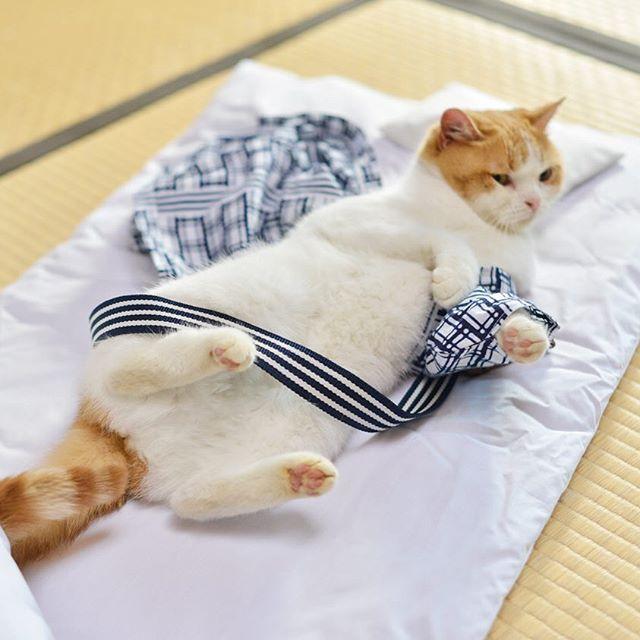 ムムム、からまったにょだ… #じゃらん #にゃらん #旅 #猫 #ねこ #cat #trip #ニャンスタグラム #おでかけ #Japan
