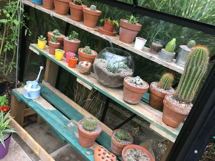 11/07/7 Cacti 🌵 greenhouse. Pallet wood staging