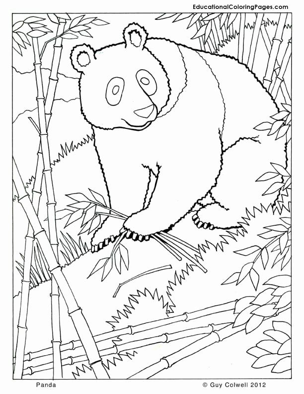 Fall Animals Coloring Pages Inspirational Panda Coloring Zoo Animals Coloring Cute Free Print In 2020 Panda Coloring Pages Zoo Animal Coloring Pages Zoo Coloring Pages
