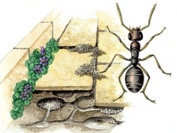 Die besten 25+ Ameisen vertreiben Ideen auf Pinterest Küchen - hausmittel gegen ameisen in der küche