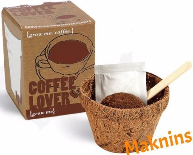Coffee Beans Seed Grow Me Coffee Lover Kit Great Gift Gardeners Coffee Plant Uk