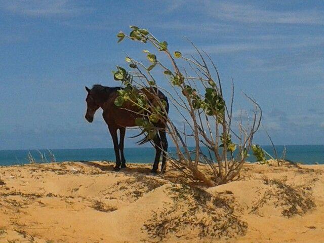 Praia malhada, cavalo preto.