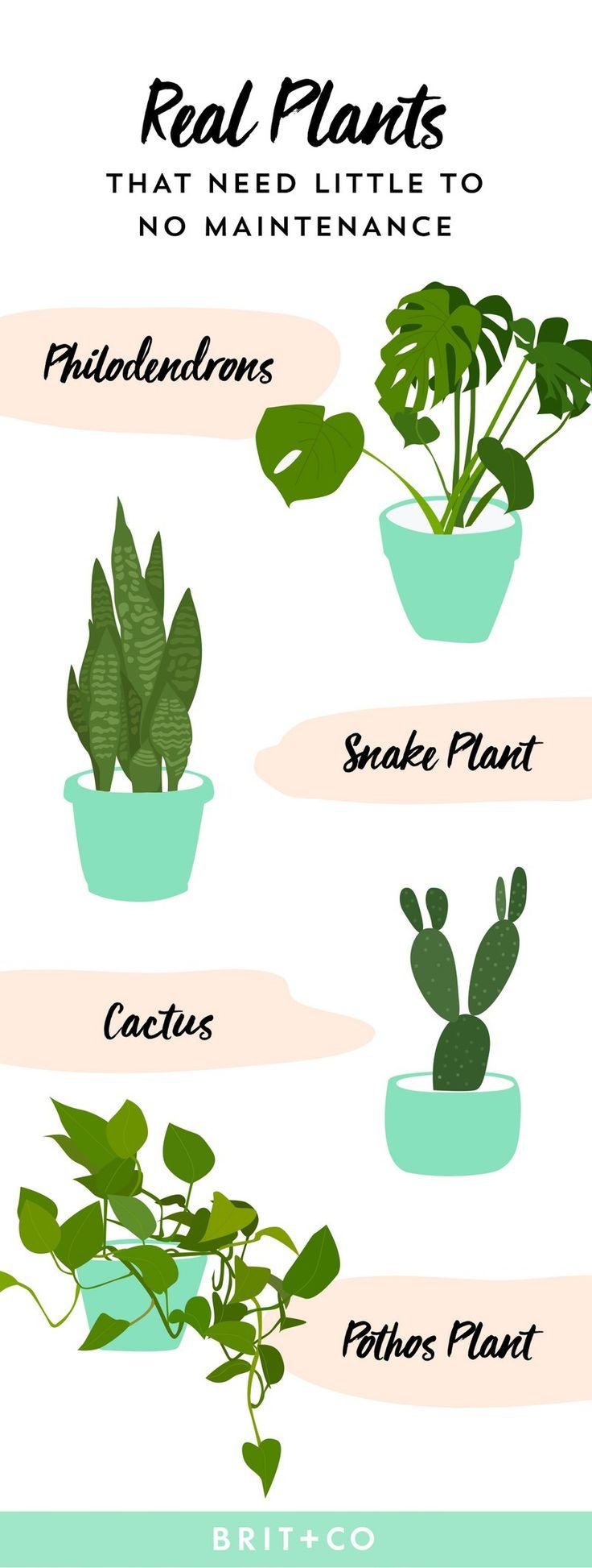 Best 25 fake cactus ideas on pinterest diy faux rocks for Plants that require no maintenance