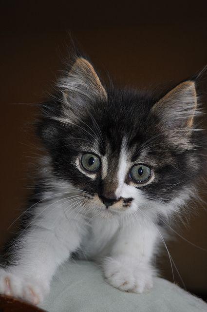 Baby cuteness! / kitten love
