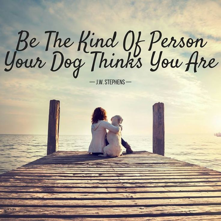 17 Best Images About Pins For Pets On Pinterest: 17 Best Images About Dog Quotes On Pinterest