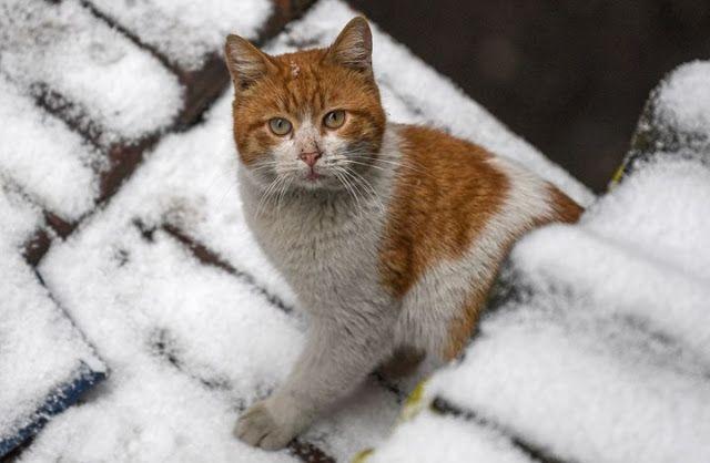 نشرت مجلة ريدرز دايجست الأمريكية تقريرا تحدثت فيه عن الأسباب التي تفسر كره القطط للماء وقالت المجلة في تقرير ترجمته Cats Animals