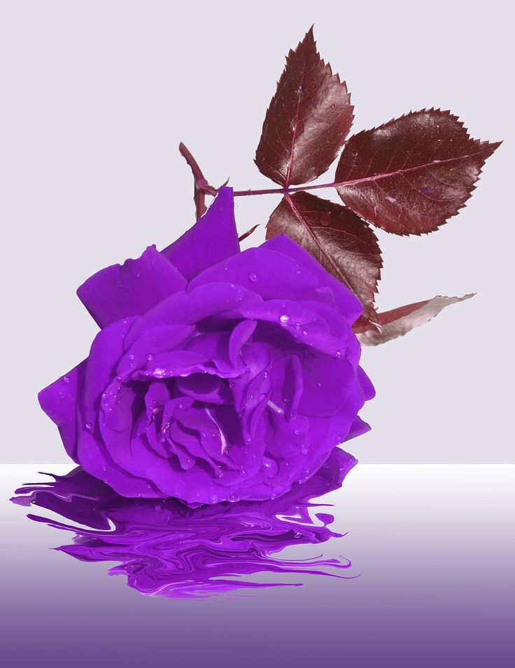 mourning-97789_1280.jpg (987×1280)