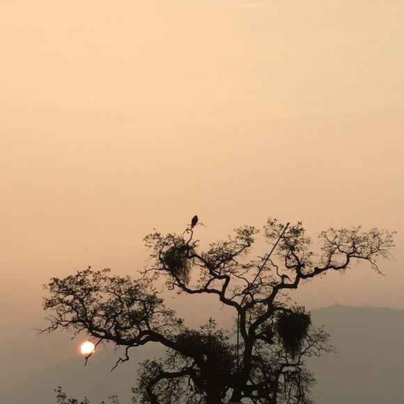 hawk at sunset  #javawolford #sequoianationalpark #threeriversca