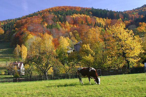 Chráněná krajinná oblast Beskydy