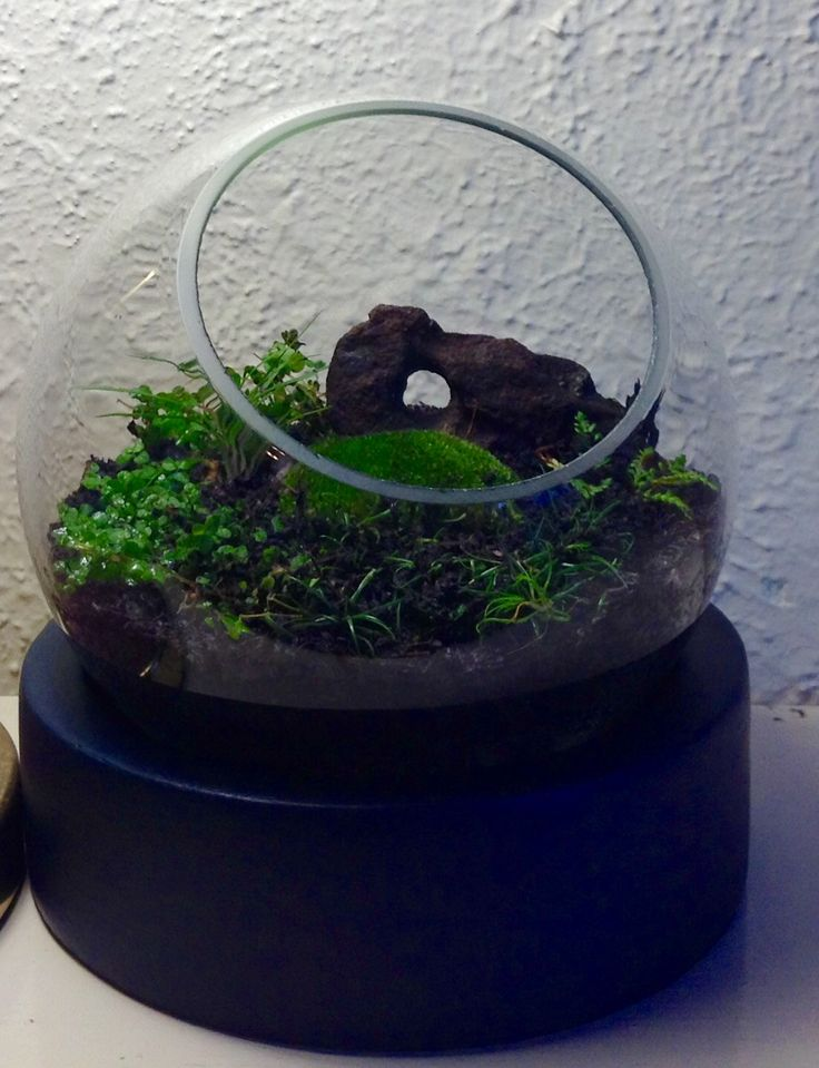 My first try at terrariums! Hopefully it will fill out nicely in time. Moss, Babies Tears, tiny fern, dwarf mondo grass.