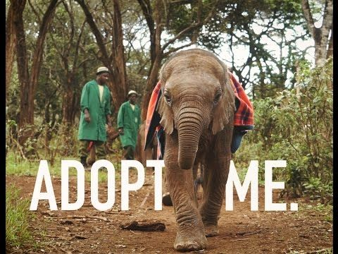 BACK TO THE WILD : Endless love and intensive care allow the orphans at DSWT to branch out into the wild in the fullness of time. See Wendi and her new baby Wiva as they return to visit their Keepers. ADOPT : https://www.youtube.com/watch?v=sgKPeFmkkI8