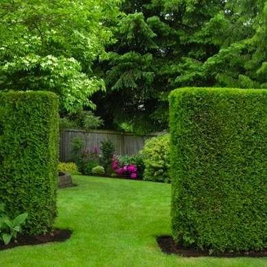 Nice Juniper Hedge   Living Fence   11 Approaches To A Landscape Boundary   Bob  Vila