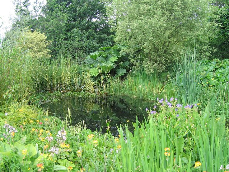 1000 images about ponds on pinterest gardens natural for Creating a pond