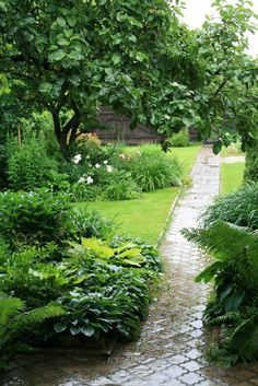 Love this garden in the rain. Close to what I pictured for my garden.