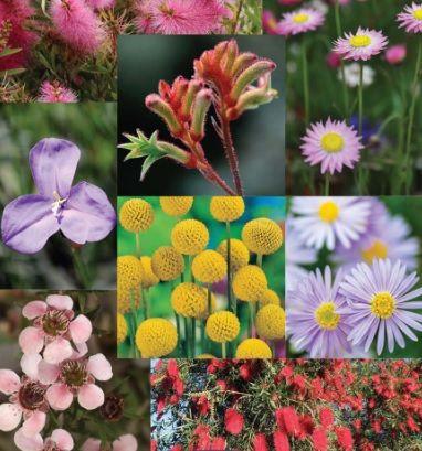 Australian Wildflowers Mix