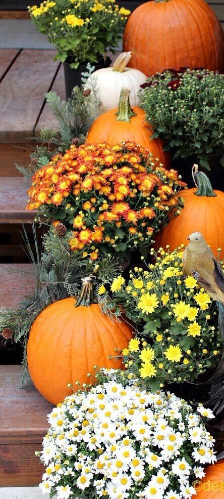 Fall plants are so lively and bright... I always get excited when I see fresh pumpkins and Fall mums at the market. For around $20, I can add a lot of color to my garden. ~~ Houston Foodlovers Book Club