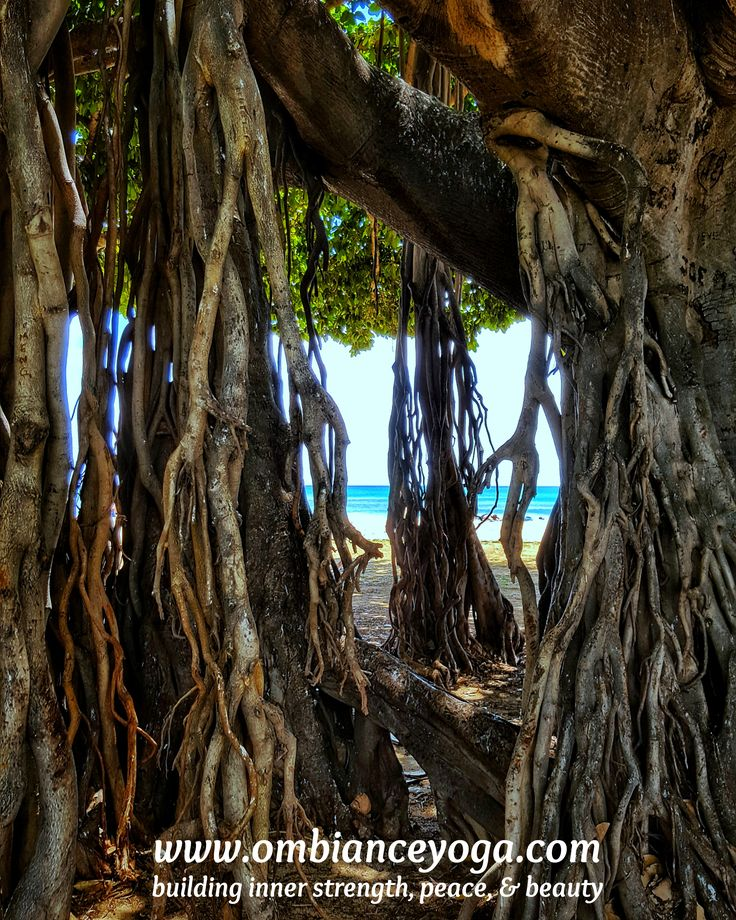 Banyan tree in Waikiki Beach, Honolulu | Hawaii | yoga photography | travel photography | yoga traveler| travels | OMbiance Yoga | yoga retreat | nature photography | world traveler